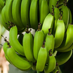 Growing bananas in Perth Western Australia