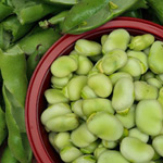 Grow broad beans in Perth