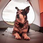 Pet friendly caravan parks in Perth