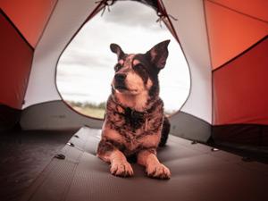 Pet friendly caravan parks Perth