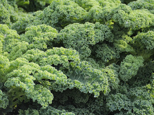 How to grow kale in Perth